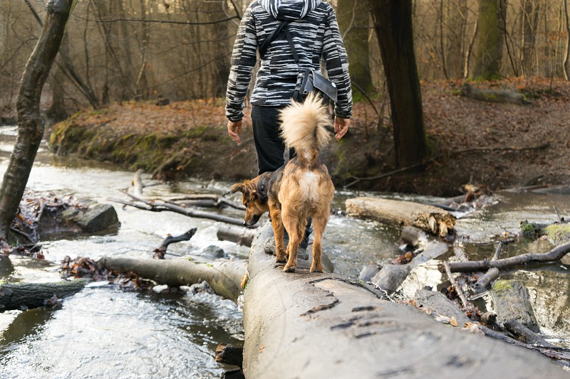 Dog balance with a woman on a tree trunk across the river photo