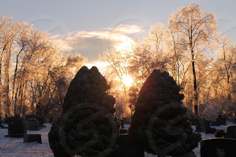 sunset light trees photo