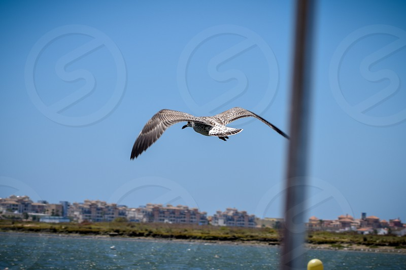 A seagull flying over the sea in the small town of Ayamonte Spain photo