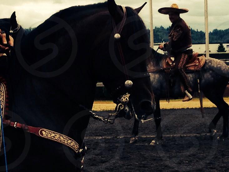 Jockey photo