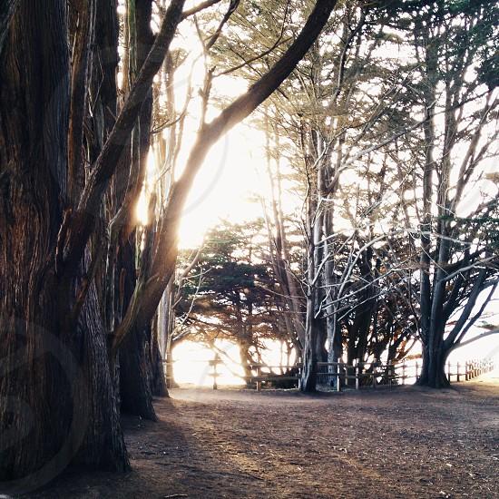 large trees photo