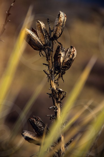 selective focus photo of dried plant photo