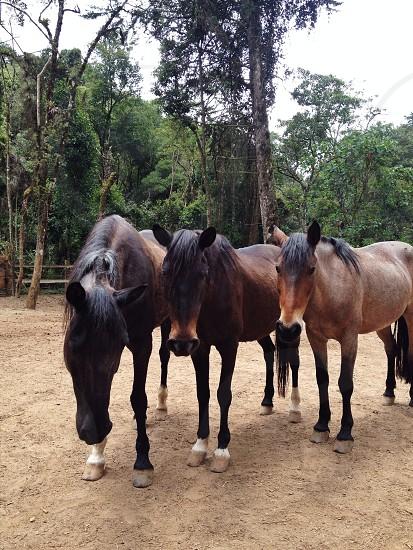 3 horses photo