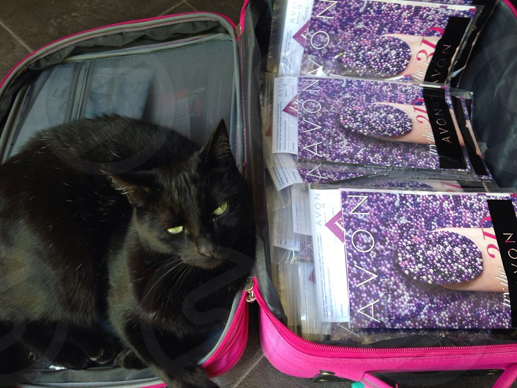 Cat in a suitcase ready for work. photo