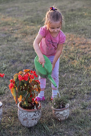 Little girl helping to water the flowers growing in flower pot pouring water from green watering can working in backyard at sunset. Candid people real moments authentic situations photo