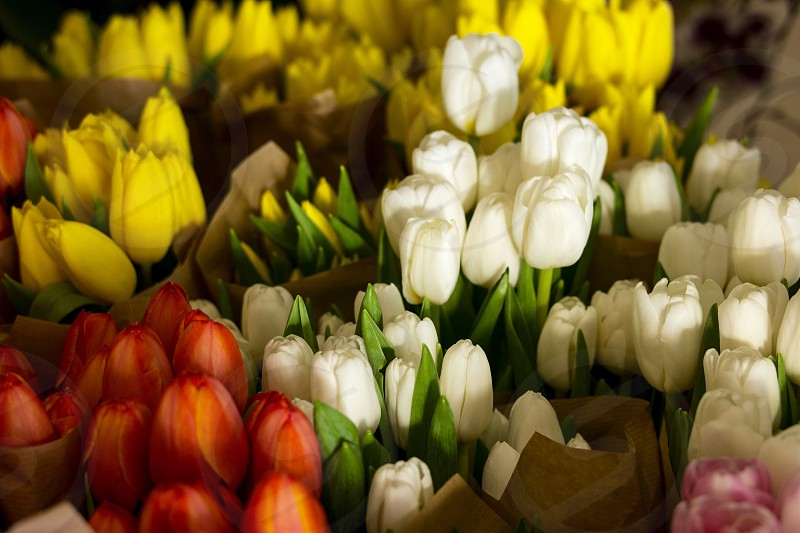 multicolored tulips flower on display photo