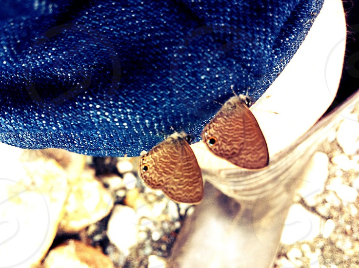 Butterfly on my knee.. photo