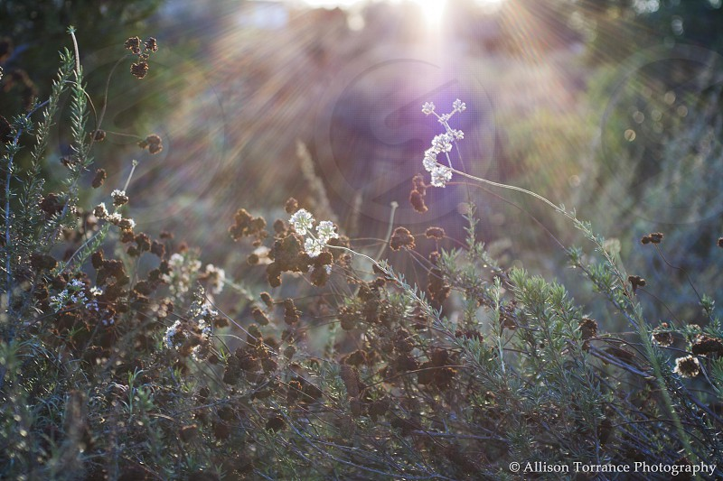 Flowers in a bush with sunlight shining through.  photo