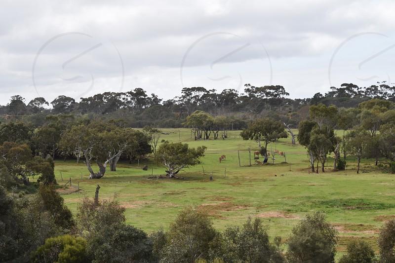 Werribee Open Range Zoo in Australia photo