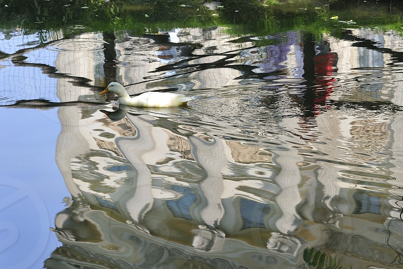 Reflection on the water with duck; shot in Milano Villa Reale public garden photo