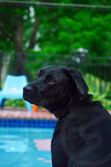 short-coated black dog near swimming pool photo