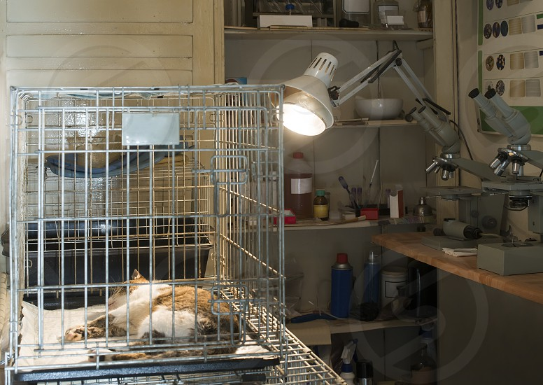 Cat at veterinary laboratory. Urgency help photo