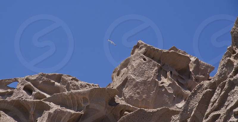 Seagull flying over pumice cliffs in Santorini photo