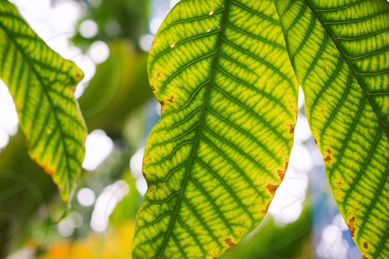 green and yellow leaf  photo