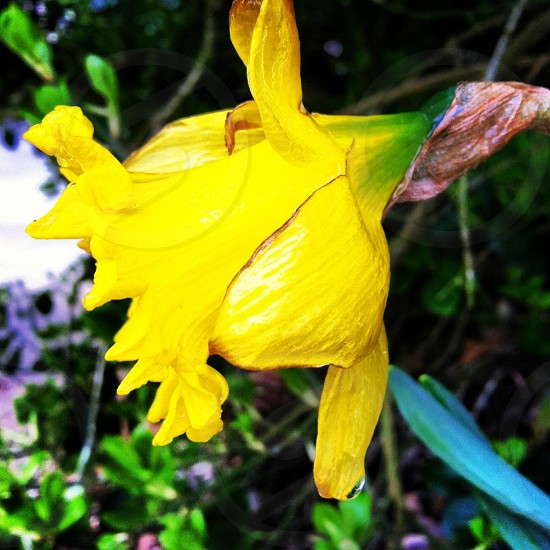 close up photography yellow petaled flower photo