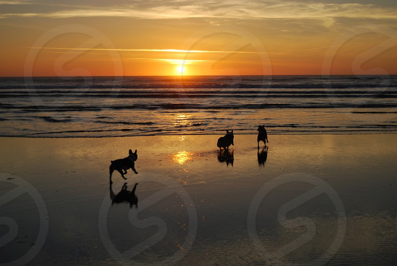 dogs playing on shore photo