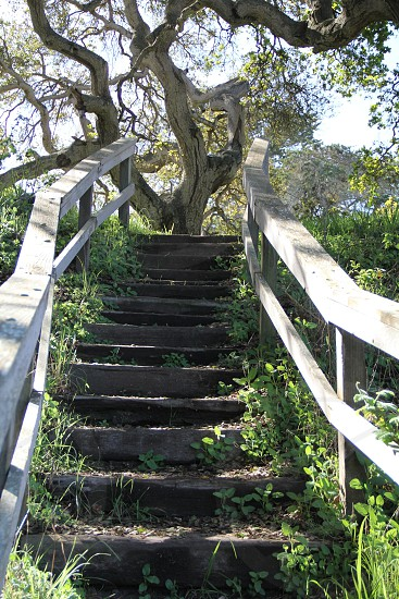 hard and soft stairs tree photo