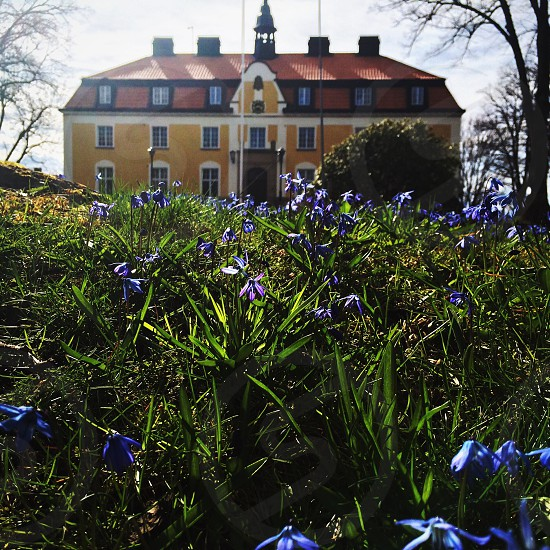 Sunny day shining sun blue flowers flower house building spring photo
