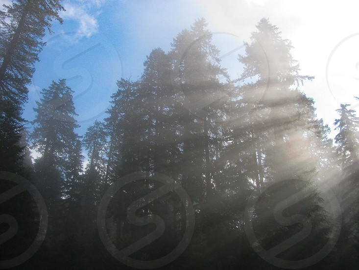 Low sun and mist create an arc of crepuscular light rays or beams of sunlight through a forest of fir trees on Sol Duc trail in Olympic National Park with blue sky above. photo