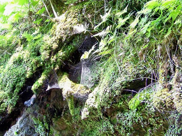 spider webs forest ferns photo