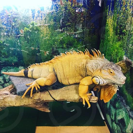 Reptile;desigirl777kgh;KGH photo