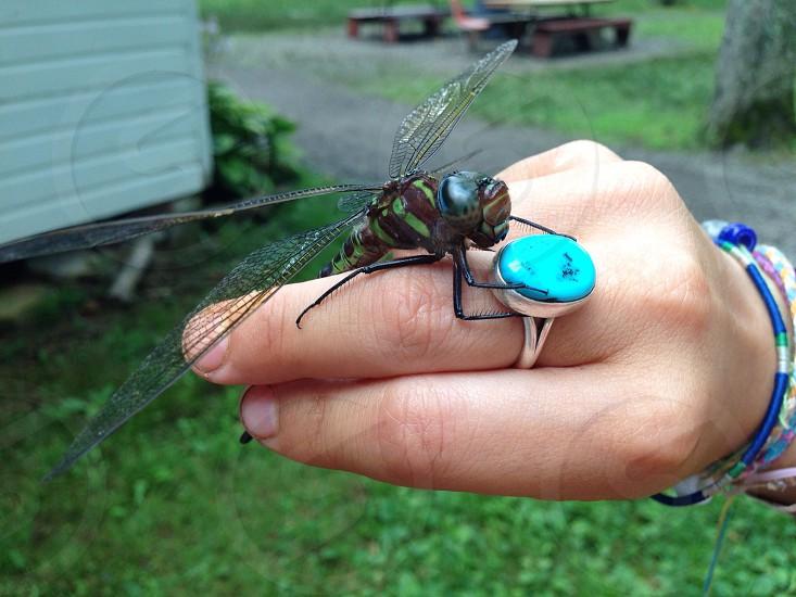 meadow hawk dragonfly photo