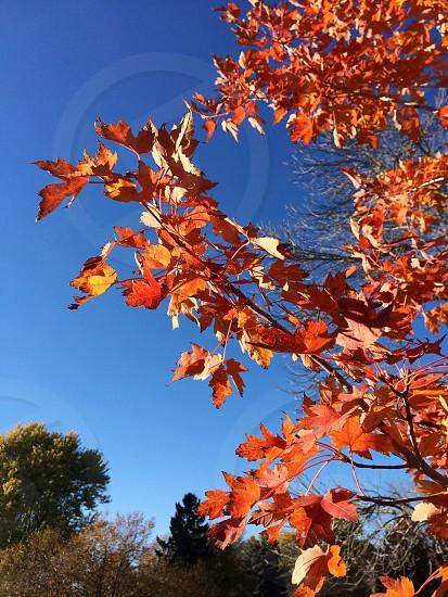 Fall day photo
