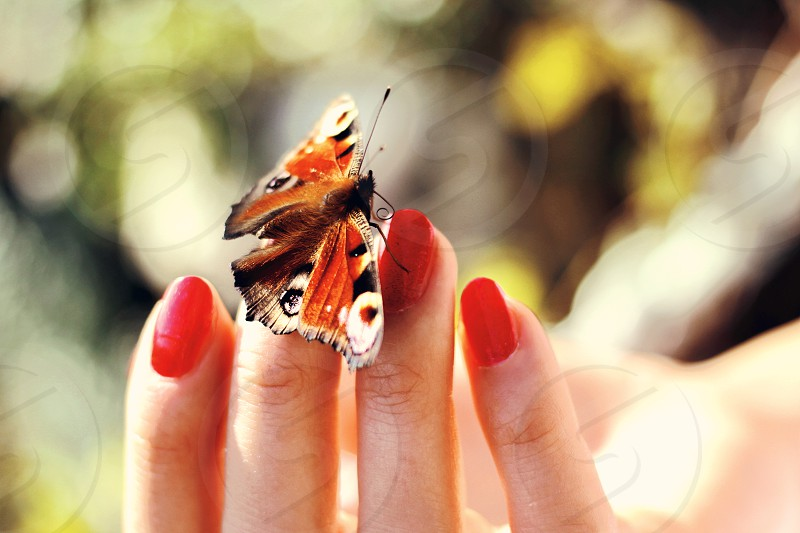 Butterfly hand holding zen tranquil nature insect habitat peace calmness courage soft nails red feminine beautiful life time connection bokeh colors vivid woman lady camouflage  photo
