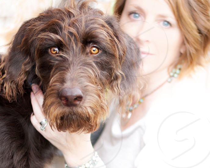 Chocolate labradoodle and female owner with blurred background photo