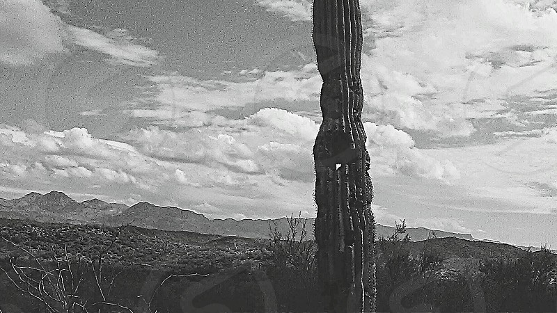 mountains nature landscape sky cactus photo