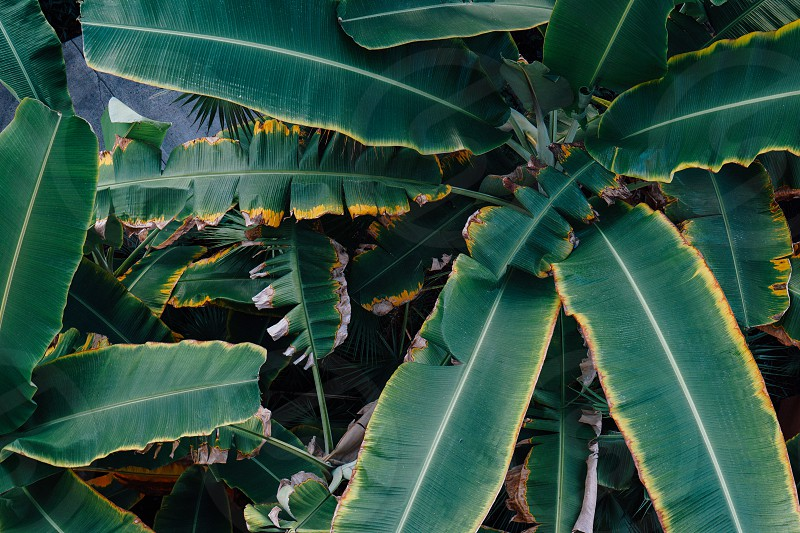 palm leaves leaf palms tropical blue teal plant summer green photo
