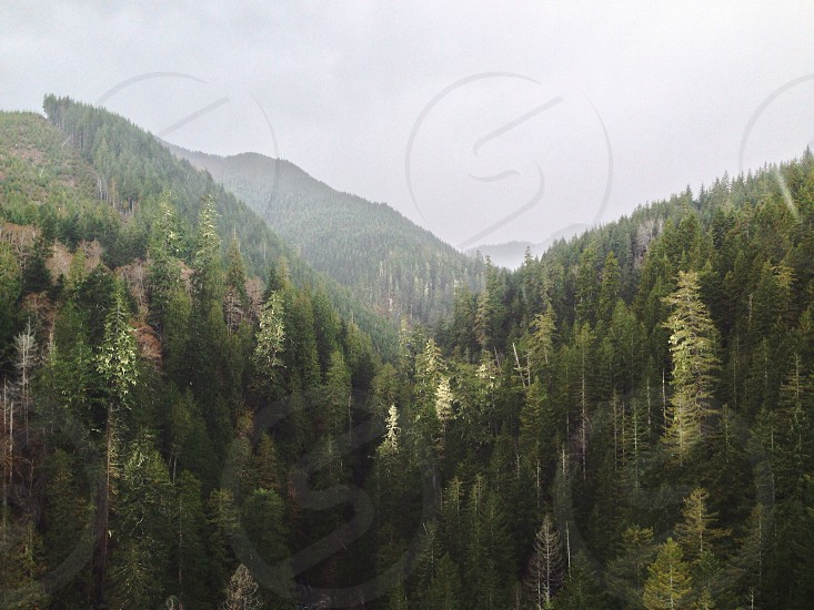 aerial view of tree tops on mountainside  photo
