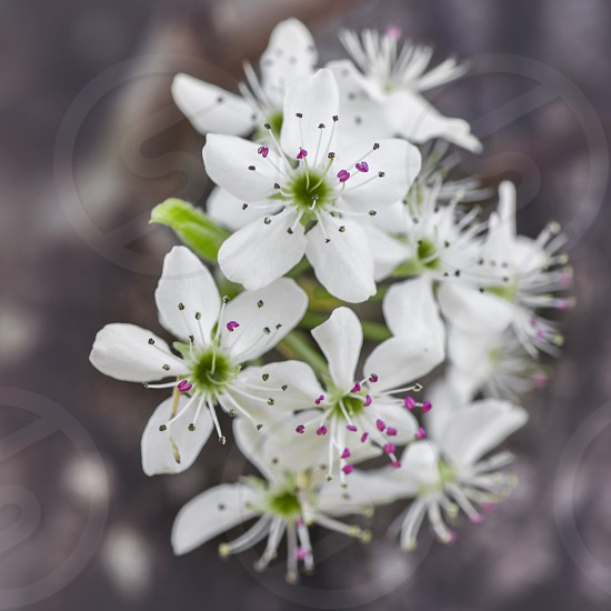 closeup photography of white 5 petaled flower photo