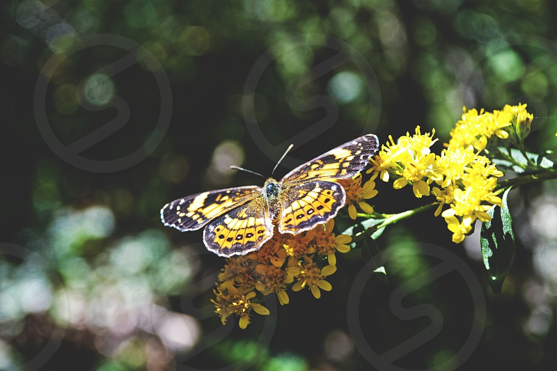 nature butterfly bokeh close up flowers spring  photo