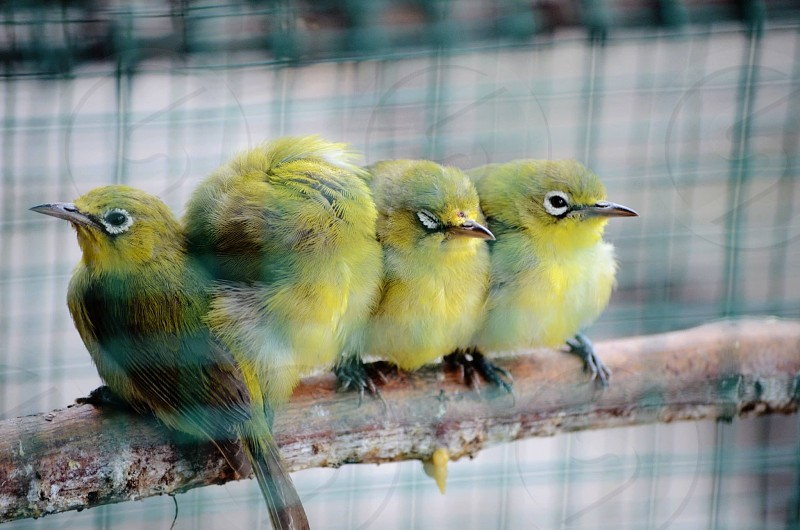 yellow and black bird on cage photo