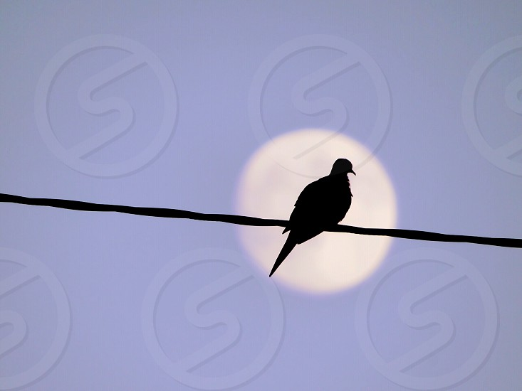Bird moon nature animal photo
