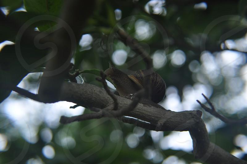 Snail climbing the tree photo