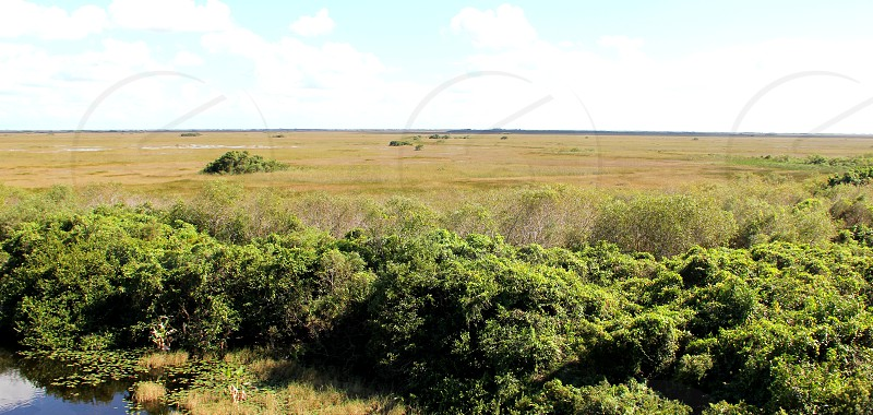 Shark Valley Everglades National Park mangroves marsh photo