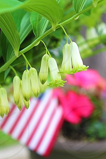white bell like flower photo