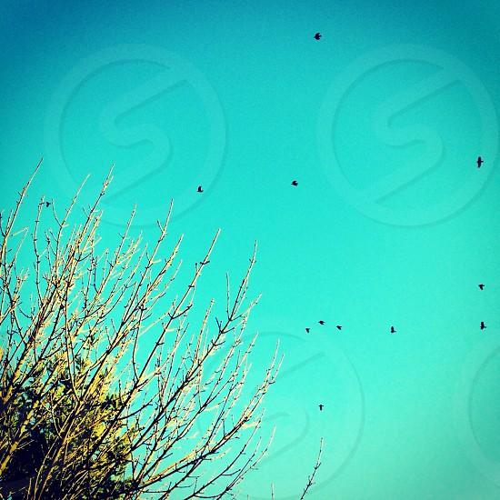 Blue sky birds tree photo