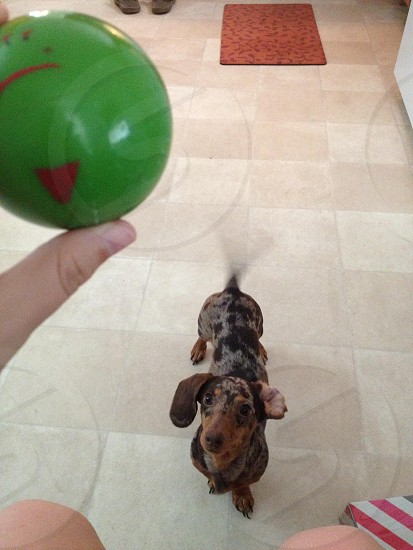 Ball! photo
