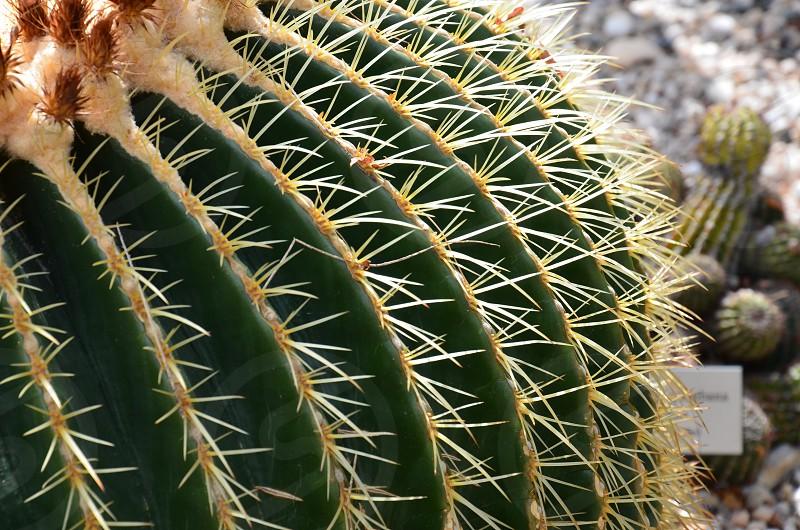 green spiny cactus photo