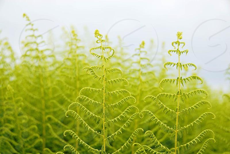 ferns in spring ferns photo