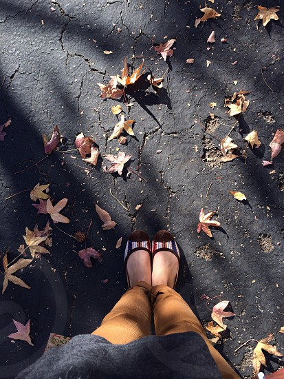 person standing with maple leaves on floor photo