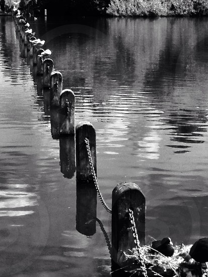 grayscale photo of fence photo