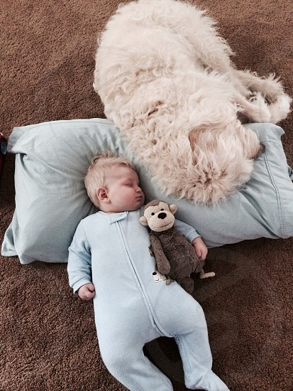 Dog and baby sleeping napping labradoodle sharing pillow on floor  carpet photo
