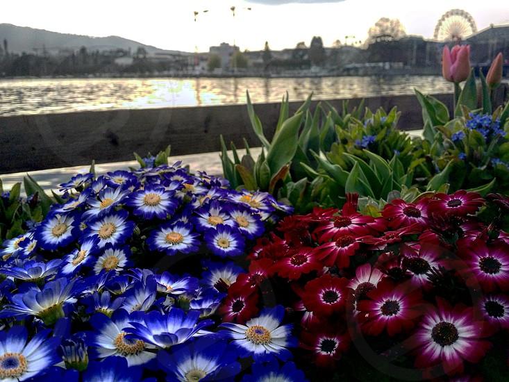garden of flowers near bay photo