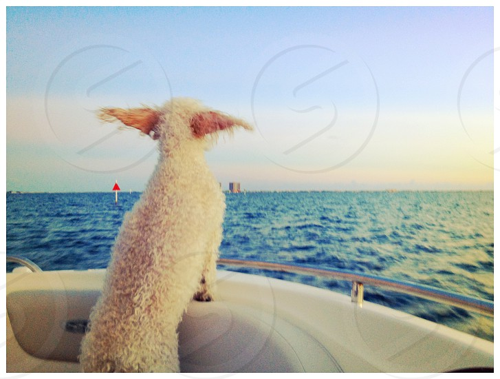 A happy dog on a boat  photo