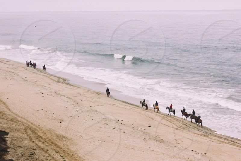 horses on the shoreline photo