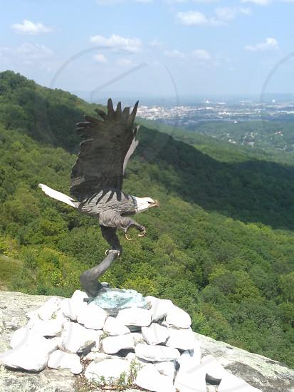 Free As A Bird! #chattanooga #amazingview #freebird #baldeagle #soarabove #howgreatthouart #lookoutmtn #greatsmokeymtns photo
